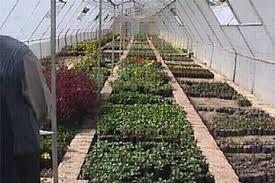 Horticulture of Bihar