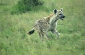 Wildlife and ecotourism of Bihar