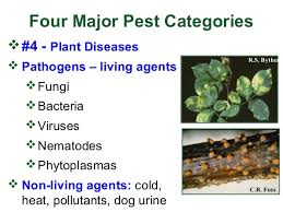 Control of Pests and crop Disease
